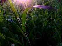 Bonheur de nature Image stock
