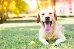Bonheur et joie purs Image libre de droits