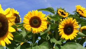 Bonheur jaune Photos stock