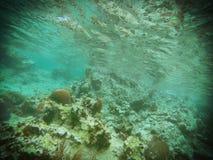 Bonheur sous-marin Images libres de droits