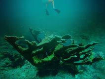 Bonheur sous-marin Photos stock
