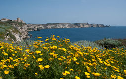 Bonifacio cliff Royalty Free Stock Image