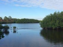 Calm waters. Bonita beach     calm.   Still waters Royalty Free Stock Photo