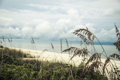 Bonita Springs royalty free stock photography