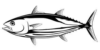 Bonite Tuna Black e pesce bianco Immagine Stock