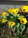 Bonito amarelo e preto Imagem de Stock Royalty Free