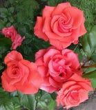Bonito, beleza, aniversário, florescendo, flor, ramalhete, close up, cor, cor, flora, floral, flor, flores, jardim, presente, gre Fotos de Stock Royalty Free