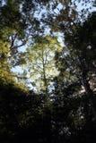 Bonito da árvore Fotos de Stock Royalty Free