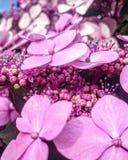 Bonito e cor-de-rosa Imagens de Stock Royalty Free