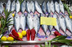 Bonito fishes for sale at decorated fish market. Bonito fishes for sale on a well decorated stand at the fish market Royalty Free Stock Image