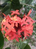 Bonito, flores, fundo, vermelho, o mais bonito fotos de stock royalty free