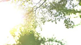 Bonito fora do por do sol do foco Brilho de Sun completo o sopro nas folhas da árvore do vento filme