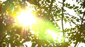 Bonito fora do por do sol do foco Brilho de Sun completo o sopro nas folhas da árvore do vento video estoque