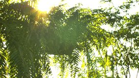 Bonito fora do por do sol do foco Brilho de Sun completo o sopro nas folhas da ?rvore do vento filme