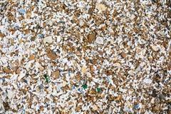 Bonito muitas conchas do mar e pedras e opinião superior da rocha no Sandy Beach na ilha tropical Os escudos fecham-se acima, baí imagem de stock royalty free