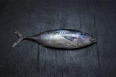 Free Bonito Tuna On Black Backgruand Royalty Free Stock Photography - 124416647