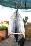 Bonito tuna salted dried fish Mediteraranean sarda Stock Photography