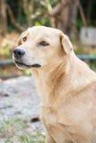 Bonito um cão Imagem de Stock Royalty Free