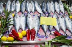 Bonitoen fiskar till salu på den dekorerade fiskmarknaden Royaltyfri Bild