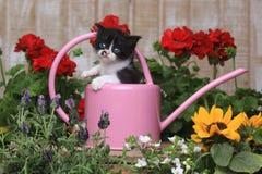 3 bonitos gatinho semanas de idade do bebê em um ajuste do jardim Fotos de Stock