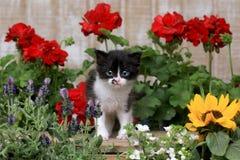 3 bonitos gatinho semanas de idade do bebê em um ajuste do jardim Foto de Stock