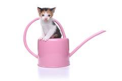 3 bonitos gatinho semanas de idade do bebê em uma lata molhando do jardim Fotografia de Stock Royalty Free
