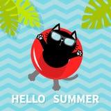 Bonjour été Chat noir flottant sur le cercle rouge de l'eau de piscine d'air lifebuoy Lame de palmier Caractère de détente de ban Photos libres de droits