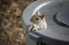 Bonjour, écureuil Photo libre de droits