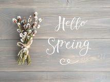 Bonjour fleurs de saule de ressort Photographie stock