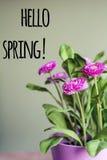 Bonjour message de ressort avec belles fleurs roses images stock