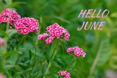 Bonjour texte de juin, fond d'été avec des fleurs photo libre de droits