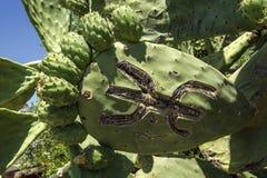 Bonkreta kaktus z cyzelowaniem postać fotografia royalty free