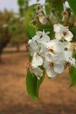 Bonkreta kwiat fotografia stock