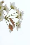 Bonkreta kwiaty obrazy royalty free