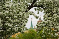 Bonkreta kwitnie blisko Kremlin Fotografia Stock