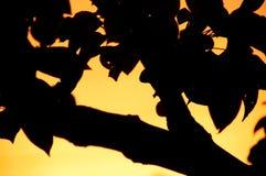 bonkrety abstrakcjonistyczny drzewo Zdjęcie Stock