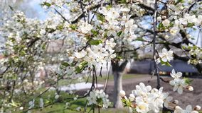 Bonkrety drzewa kwiaty zbiory wideo