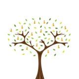 bonkrety drzewo Obraz Royalty Free