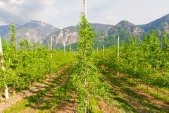 Bonkrety drzewo Zdjęcia Stock