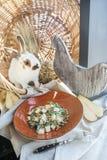 Bonkrety i Arugula sałatka z Sosnowymi dokrętkami blisko pięknego białego królika Fotografia Stock