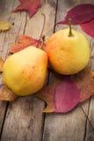 Bonkrety jesieni żniwo Obraz Royalty Free
