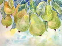 Bonkrety na drzewie beak dekoracyjnego latającego ilustracyjnego wizerunek swój papierowa kawałka dymówki akwarela jesienią zbliż Fotografia Royalty Free