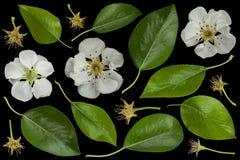 Bonkrety okwitnięcia kwiatu kolekcja Zdjęcia Royalty Free