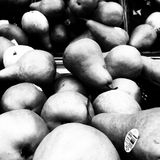 Bonkrety w czarny i biały Obraz Stock