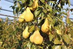 Bonkrety w drzewie Fotografia Stock