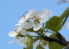 Bonkrety wiosna Zdjęcia Royalty Free