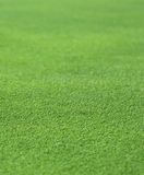 Bonne herbe verte Photos libres de droits