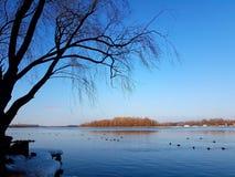 Bonne journée ensoleillée d'hiver Photographie stock