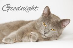 Bonne nuit carte avec le chat Images libres de droits