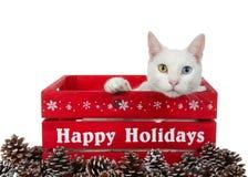 Bonnes fêtes chat blanc avec le Heterochromia image libre de droits